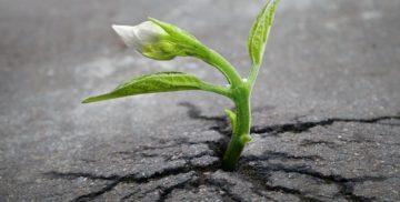 Crescimento Pós-Trauma