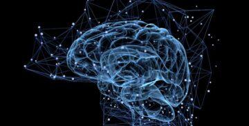 Cientistas Descobrem Universo Multidimensional no Cérebro Humano